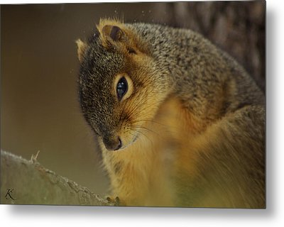 Gazing Squirrel Metal Print