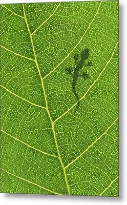 Gecko Metal Print by Aged Pixel