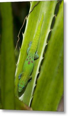 Gecko Metal Print by Mike Herdering