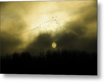 Geese At Sunset Metal Print