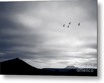 Metal Print featuring the photograph Geese Flying South For Winter by Peta Thames