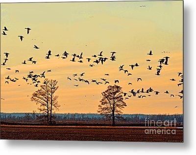 Geese In Flight I Metal Print by Debbie Portwood