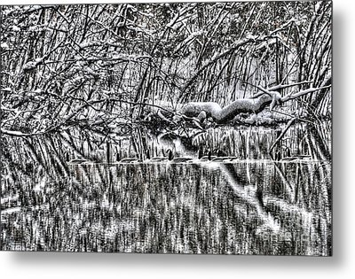 Geese On Pond Black And Wihite Metal Print by Dan Friend
