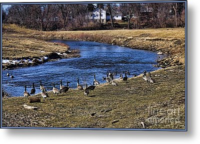 Metal Print featuring the photograph Geese On The Creek by Jim Lepard
