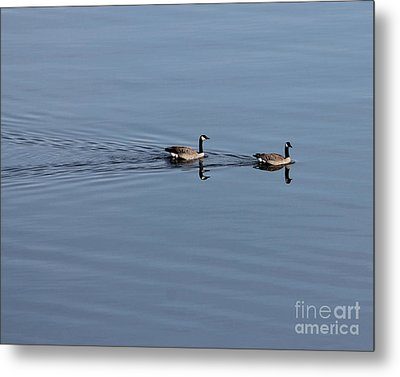 Geese Reflected Metal Print by Leone Lund