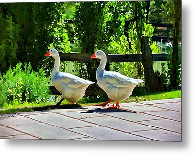 Metal Print featuring the photograph Geese Strolling In The Garden by Tracie Kaska