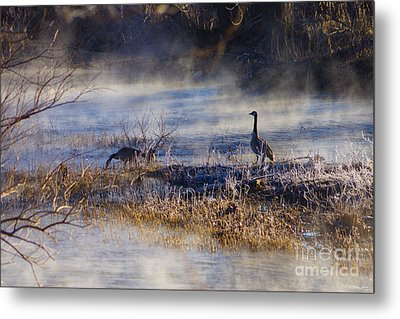 Geese Taking A Break Metal Print by Jennifer White