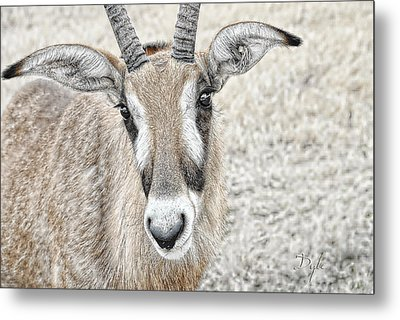 Metal Print featuring the photograph Young Oryx by Dyle   Warren