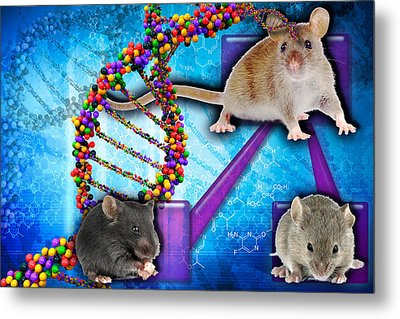 Gene Expression In Mice Metal Print