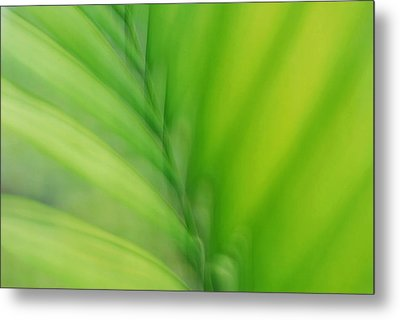Metal Print featuring the photograph Gentle Breeze by Lorenzo Cassina