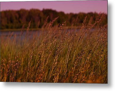 Gentle Breeze Metal Print by Miguel Winterpacht