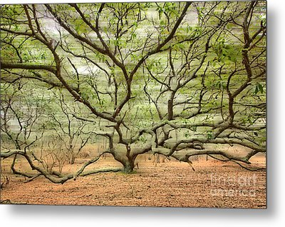 Gentle Thoughts - A Tranquil Moments Landscape Metal Print