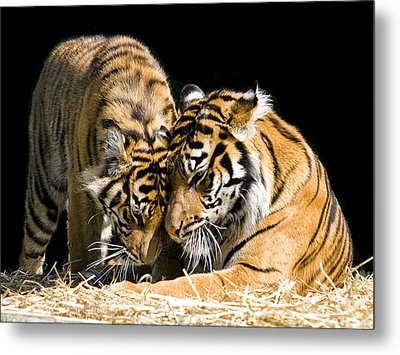 Gentle Touch Metal Print by Gary Neiss