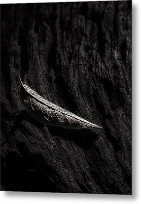 Gently Resting Metal Print by Bob Orsillo