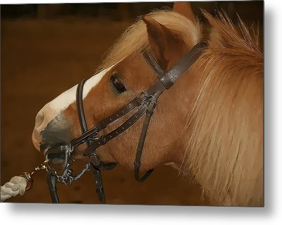 Genuine Pony Metal Print by Jerome Lynch