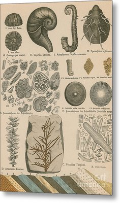 Geology And Paleontology 1886 Metal Print by Science Source