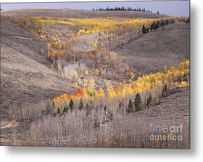 Geometric Autumn Patterns In The Rockies Metal Print