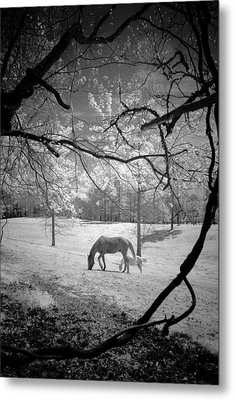 Metal Print featuring the photograph Georgia Horses by Bradley R Youngberg