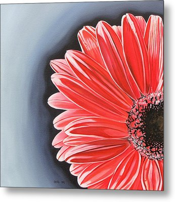 Gerber Daisy Metal Print by Kevin F Heuman