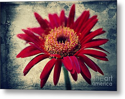 Gerbera Metal Print by Angela Doelling AD DESIGN Photo and PhotoArt