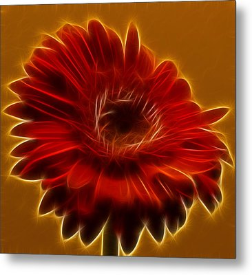 Gerbia Daisy Metal Print by Bill Barber