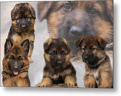German Shepherd Puppy Collage Metal Print by Sandy Keeton