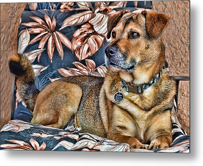 Metal Print featuring the photograph Gerry And The Lounge Chair by Barbara Manis