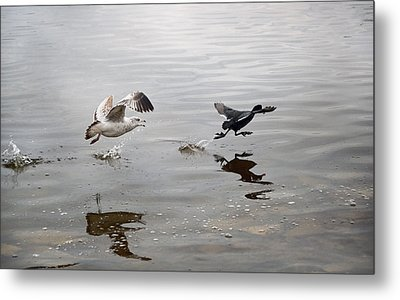 Get Back Here.... Metal Print by Steven Michael