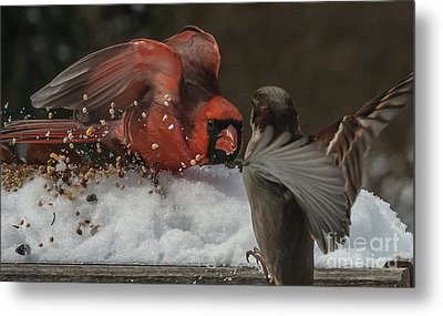 Get Off My Feeder Metal Print