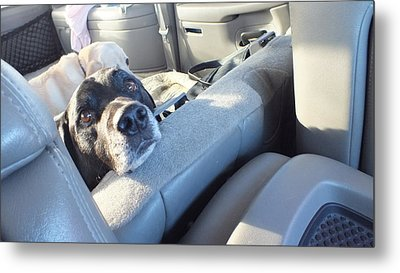 Get Outta My Seat Metal Print by Donna Brown