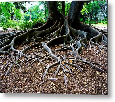 Get To The Root Of It Metal Print by Susan Duda
