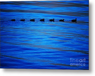 Metal Print featuring the photograph Getting Your Ducks In A Row by Cynthia Lagoudakis
