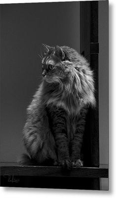 Ghiga Posing In Black And White Metal Print by Raffaella Lunelli
