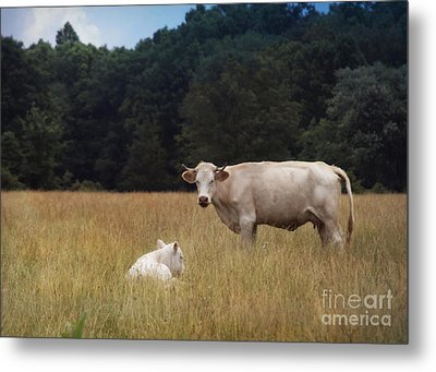 Ghost Cow And Calf Metal Print