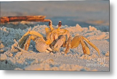 Ghost Crab Metal Print by Eve Spring