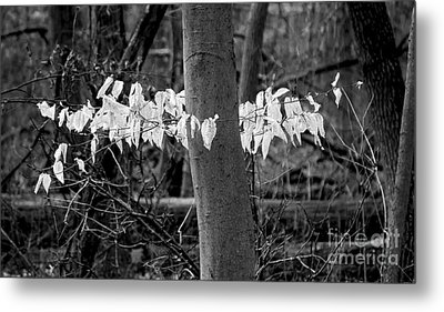 Ghost Leaves Metal Print by Steven Ralser