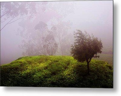 Ghost Tree In The Haunted Forest. Nuwara Eliya. Sri Lanka Metal Print by Jenny Rainbow