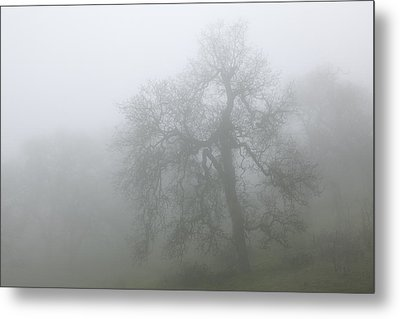 Metal Print featuring the photograph Ghostly Oak In Fog - Central California by Ram Vasudev