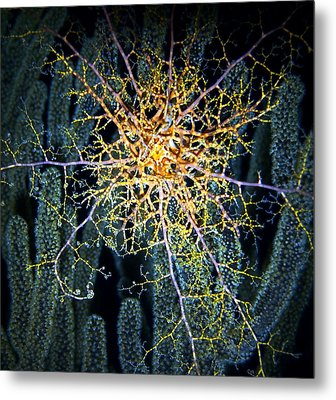 Giant Basket Star At Night Metal Print