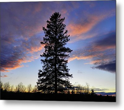 Giant Spruce Tree Sunset Metal Print