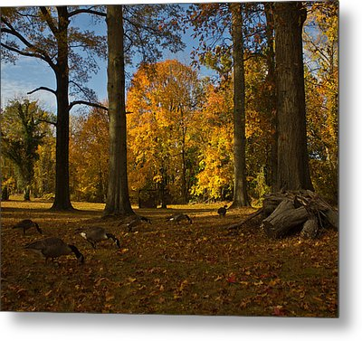 Metal Print featuring the photograph Giant Trees And Ducks Feeding by Jose Oquendo