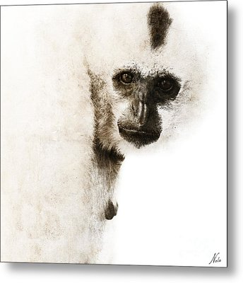 Crested Gibbon #1 Metal Print by Nola Lee Kelsey