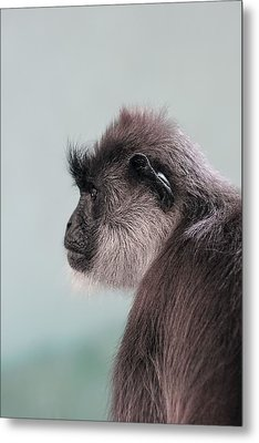 Metal Print featuring the photograph Gibbon Monkey Profile Portrait by Tracie Kaska
