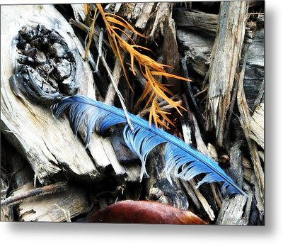 Gifts From Nature Metal Print by Michele Nelson