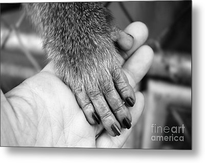 Gimme Five Metal Print
