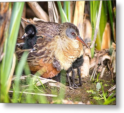 Gimme Shelter Metal Print by John Williams