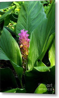 Ginger Blossom Metal Print by Theresa Willingham