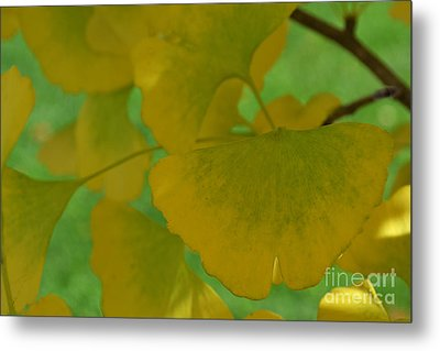 Ginkgo Leaves Abstract Metal Print