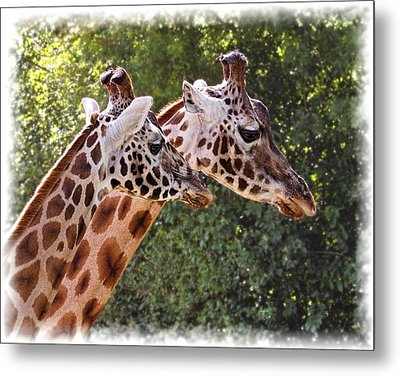 Giraffe 03 Metal Print