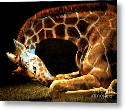 Giraffe 20150211brun Metal Print by Wingsdomain Art and Photography